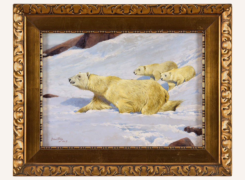 Sichernde Eisbärin mit 2 Jungtieren