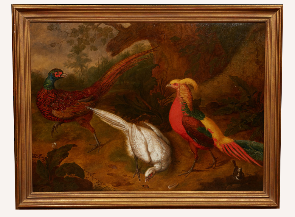 Two common pheasants, a golden pheasant and a pied wagtail in a forest landscape with insects