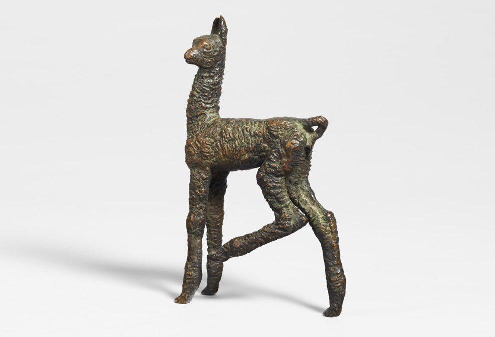Ein junges Lama
