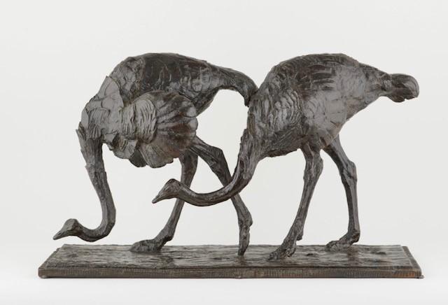 Deux autruches en marche
